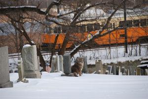 Trolley through Cedar Grove Cemetery
